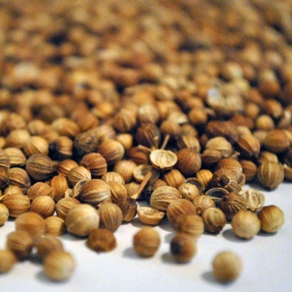Cilantro-Grano-Coriandrum-sativum-plantasmedicinalesagranel