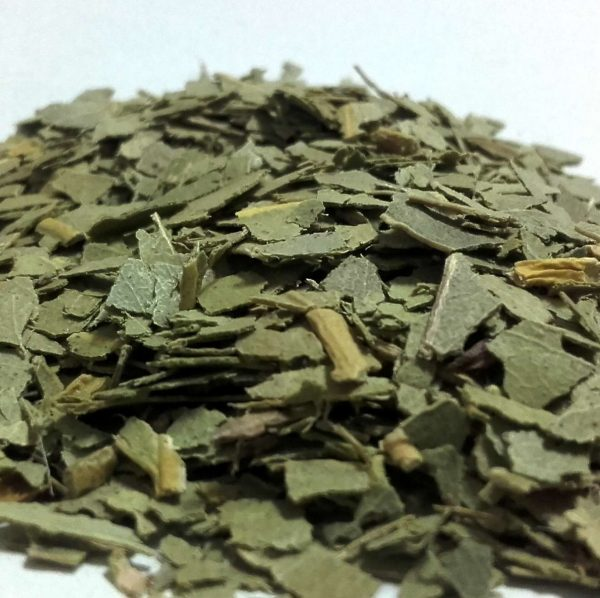Eucalipto-Hoja-Trit-Eucalyptus-globulus-plantasmedicinalesagranel