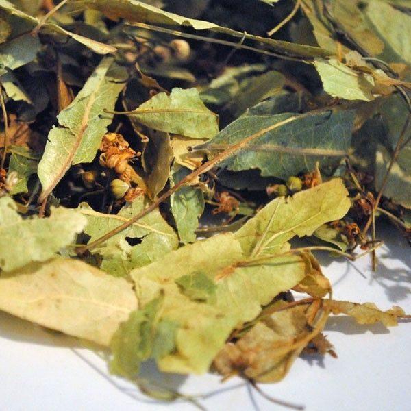 Tila-plantasmedicinalesagranel