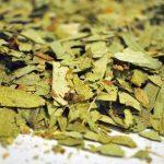 Sen-hojas-Cassia-Angustifolia-plantasmedicinalesagranel