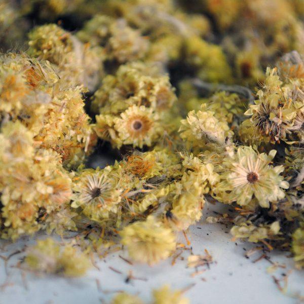 heliocriso-plantasmedicinalesagranel